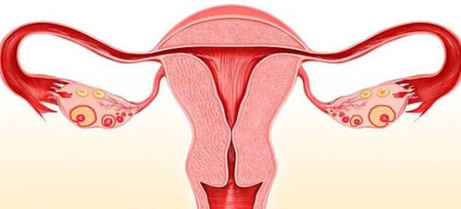 Стадии эрозии у женщин: подробное описание степеней болезни с симптомами