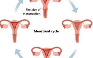 Все о менструальном цикле: нормальная продолжительность и фазы