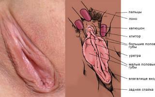 Женские половые губы: особенности строения