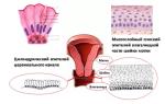 Анализ биопсия матки