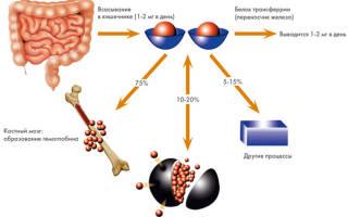 Если не хватает железа в организме, симптомы