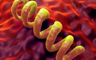 Первичный сифилис — лечение и диагностика